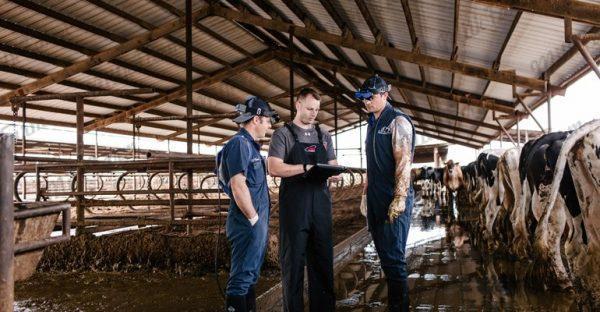 Узи-Сканер для коров Easi-Scan